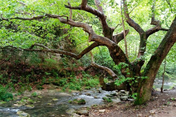 Puente de Dios Sierra Gorda Foto El Souvenir